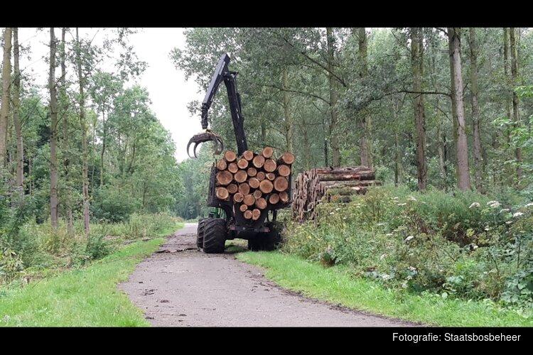 Boswerkzaamheden in het Purmerbos